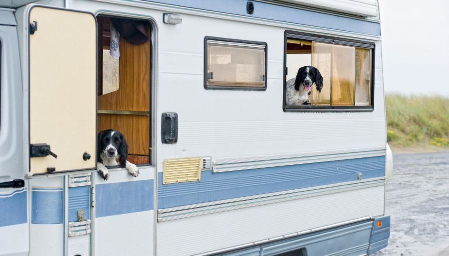 5 Best Dog Friendly Motorhome Parks